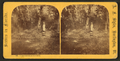 A New settlement in Florida, by Styles, A. F., 1832-1910.png
