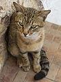 A cat in Pireas (14234161073).jpg