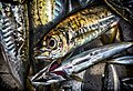 A fish in market in colored.jpg