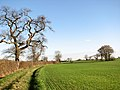 A tree-hedge field boundary - geograph.org.uk - 1596460.jpg