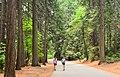 A walk in the woods, Yosemite (38427784650).jpg