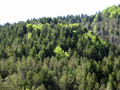 Abetina di Fossa Cupa (2) - Monti della Maddalena (Potenza).PNG