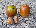 Acorns on the granite bench, October 2015 - Stacking.jpg