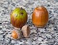 Acorns on the granite bench, October 2015 - Stacking.jpg