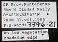 Acromyrmex octospinosus psw7796-21 label 1.jpg