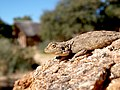 Agame Canon Lodge Namibia.jpg