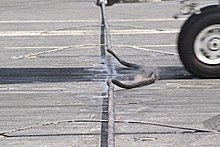 Aircraft Wiring | Arresting Gear Wikipedia