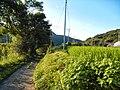 Akagimachi Tsukuda, Shibukawa, Gunma Prefecture 379-1103, Japan - panoramio (2).jpg