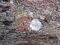 Alluvial polymict conglomerate (Mount Rogers Formation, Neoproterozoic, 750-760 Ma; Fox Creek roadcut, west of Troutdale, Virginia, USA) 22 (29869219544).jpg