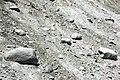 Alpine glacial till (Pleistocene; near Dana Fork, Yosemite National Park, California, USA) 4.jpg