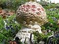 Amanita muscaria (30029980226).jpg