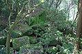 Amanoiwatate-jinja02s6s4592.jpg