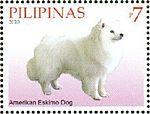 American-Eskimo-Dog-Canis-lupus-familiaris.jpg