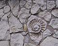 Ammonitenmauer Laibaroes.jpg