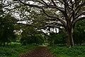 Amora Gedel Park in Hawassa (4) (28512465534).jpg