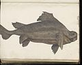 Animal drawings collected by Felix Platter, p1 - (43).jpg