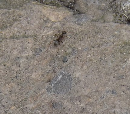 Ant in Gyumri1.jpg