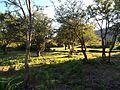 Antigos campos de cultivo.JPG