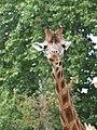 Antwerp Zoo (12210701244).jpg