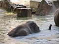 Antwerp Zoo (12211112934).jpg