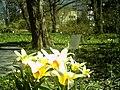 April Tulpe Freiburg Botanischer Garten - Master Botany Photography 2013 - panoramio.jpg
