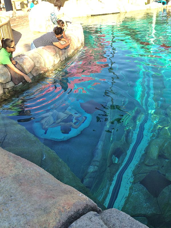 Incidents At Seaworld Parks: Aquatica Florida