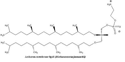Structural Biochemistry/Lipids - Wikibooks, open books for an open ...