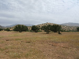 Sous - The Suss, here northeast of Taroudant, with Argan trees interplanted with cereal crops