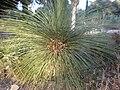 Arizona Cactus Garden 026.JPG