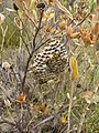 Around Minerve mini-beehive (1039988265).jpg