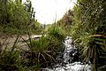 Arroyos - panoramio.jpg