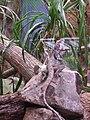 Artis, Zoo, Dierentuin - panoramio (30).jpg