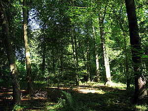 Ashampstead Common - Woods in Ashampstead Common