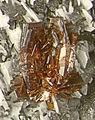 Astrophyllite-288535.jpg