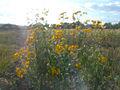 Autumn - 29 (2009). (16292044285).jpg