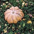 Autumn Fairytale (234149331).jpeg