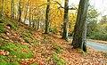 Autumn at Minnowburn 2008 (8) - geograph.org.uk - 1039135.jpg