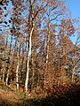 Autumn colours in Hollocombe - geograph.org.uk - 282970.jpg
