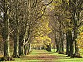 Avenue of trees on Tyne Green (2) - geograph.org.uk - 1072343.jpg