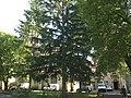 Aveyron Villefranche De Rouergue Ancienne Chartreuse Saint-Sauveur Chapelle 29052012 - panoramio.jpg