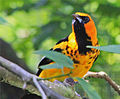 BIRDS PARADISE (7777931878).jpg