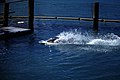 Bahamas 1988 (299) Paradise Island Paradise Lake (23545219033).jpg