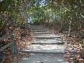 Bahia Honda FL path01.jpg