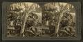 Banana trees, Hawaii, by Keystone View Company.png