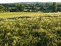 Barley, Sulham - geograph.org.uk - 848979.jpg