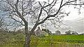 Barn - panoramio (14).jpg