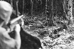 A soldier holding a sub machine gun, peers down its sights into the thick jungle
