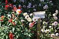Batumi Botanical Garden (40).jpg