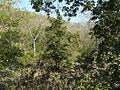 Bechadi Mara (in Kannada) (3260200163).jpg