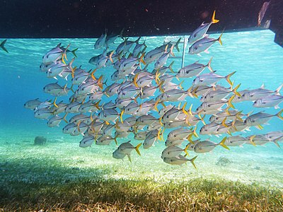 Belize snuba (17657216989).jpg